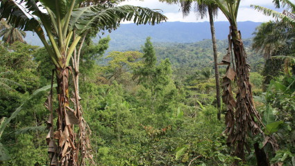 Plantations de café - cacao et champs agricoles